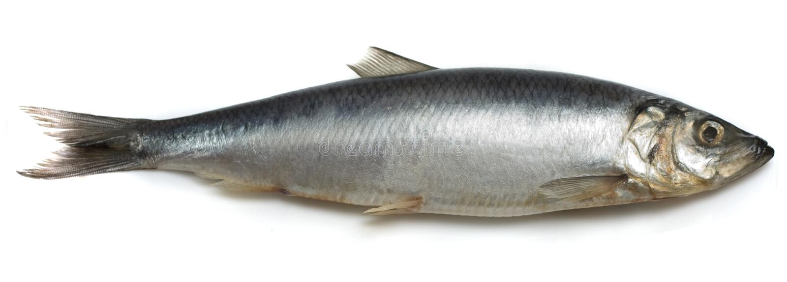 Herring. Image series of different food on white background royalty free stock image