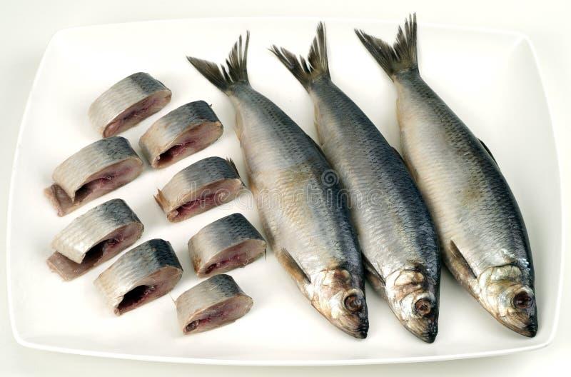 Herring. Sliced herring on the dish stock photography