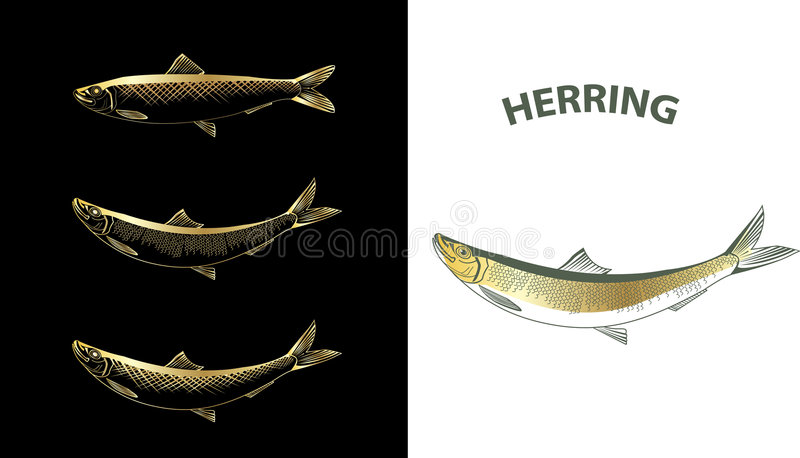 Herring. Several contour vector drawings of herring royalty free illustration