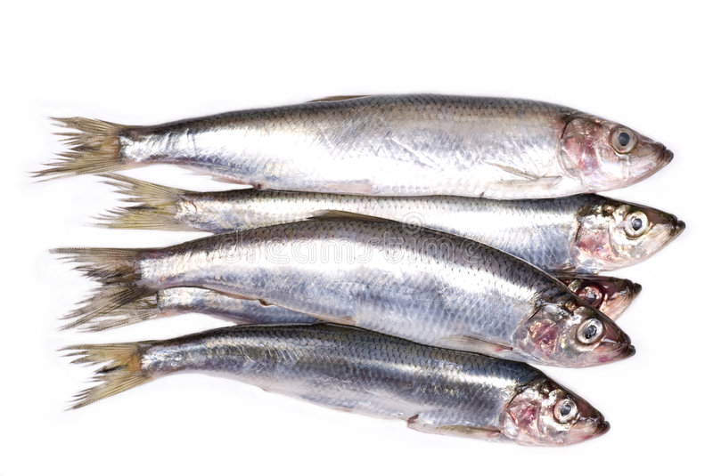 Herring. Raw herring food background close up stock images