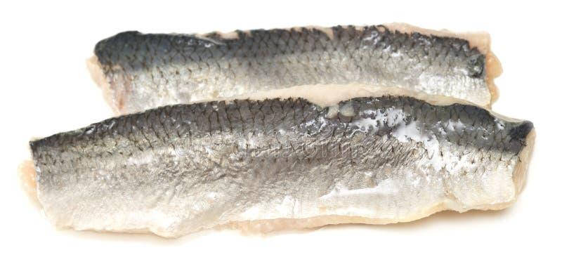 Herring filet. Herring fillet isolated on white background royalty free stock images