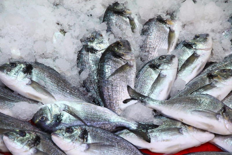 Herring fish in ice. On a market stall royalty free stock photo