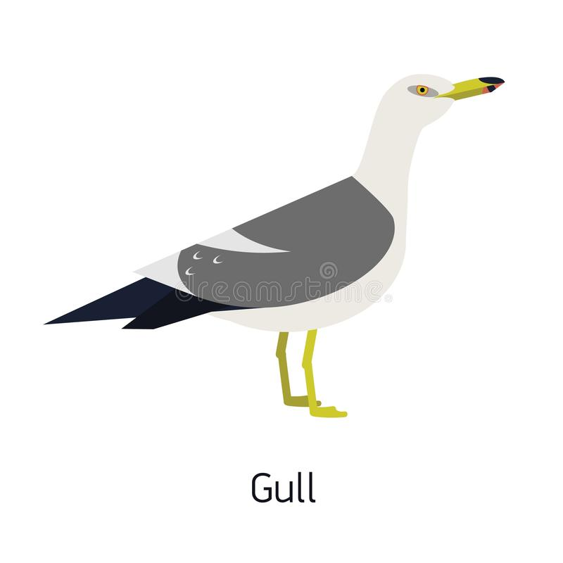 Herring gull or seagull isolated on white background. Gorgeous marine bird or seabird. Beautiful wild avian species royalty free illustration