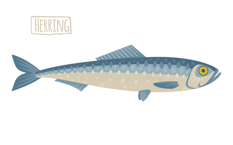 Herring illustration, flat, cartoon style. Vector herring illustration, flat, cartoon vector illustration