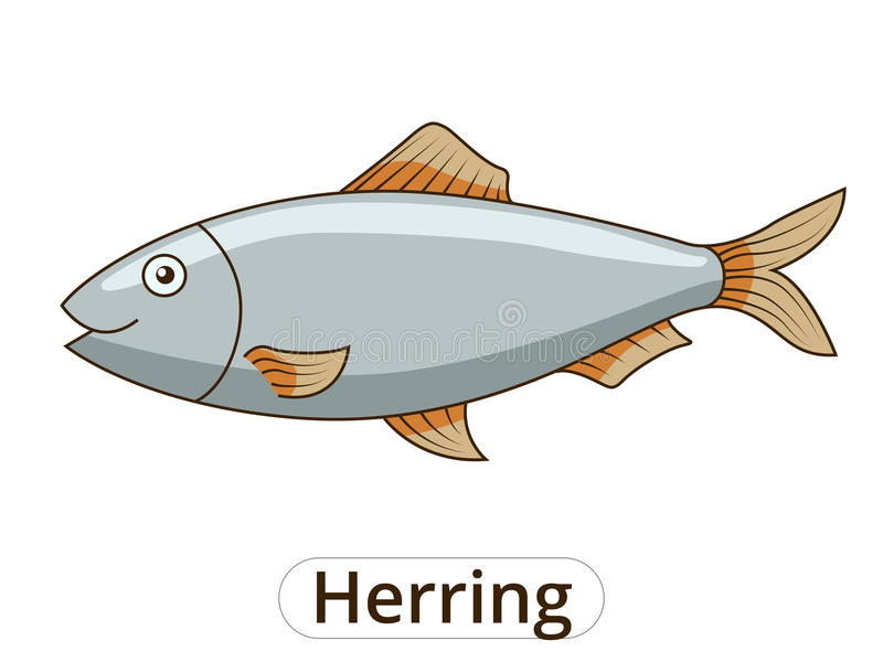 Herring underwater animal cartoon illustration. Herring underwater animal cartoon vector illustration for children stock illustration