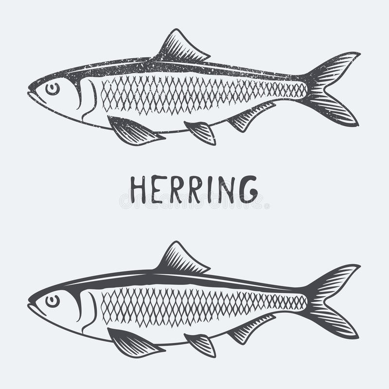 Herring vector illustration. Eps 10 royalty free illustration