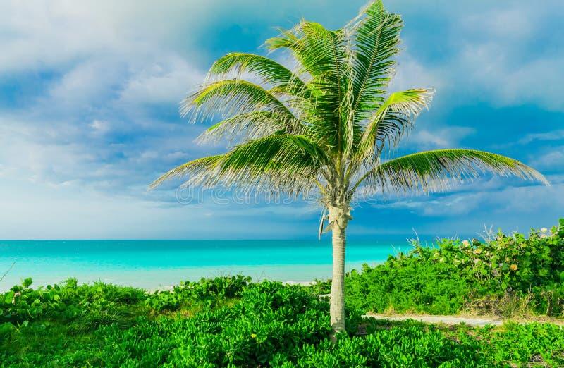 herrliche Ansicht von Kubaner-Santa Maria-Inselnaturlandschaft, ein Weg, Gehweg zum Strand und ruhiger Türkis bieten Ozean an lizenzfreie stockfotografie