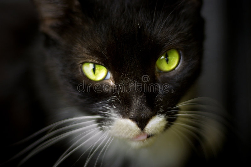 Herrliche grüne Katzenaugen lizenzfreies stockbild