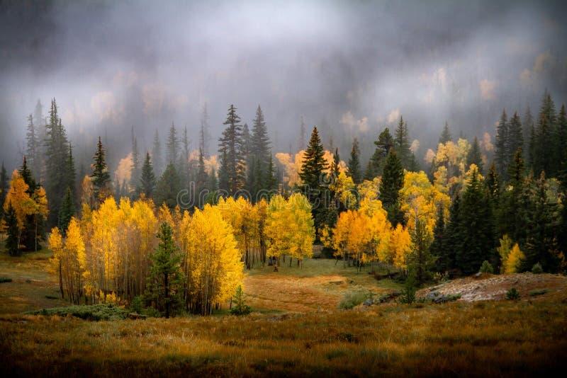 Herrliche Landstraße mit hellem Herbstlaub der Espe und der Suppengrün stockbild