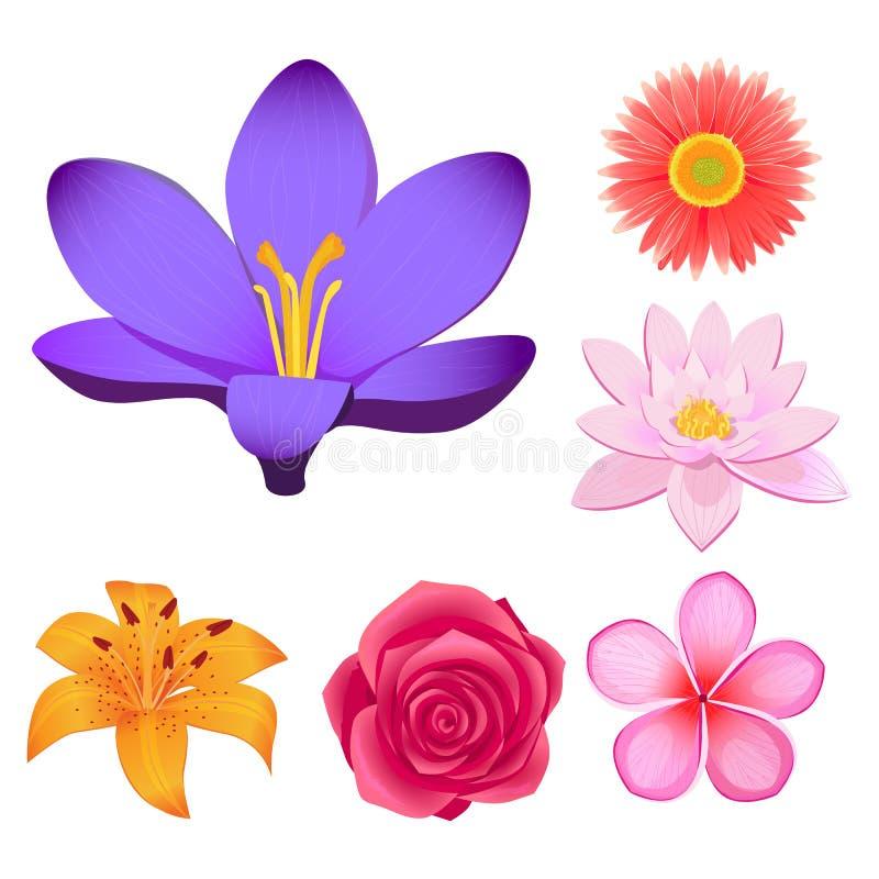Herrliche lokalisierte Illustrationen der Blumen-Knospen eingestellt stock abbildung