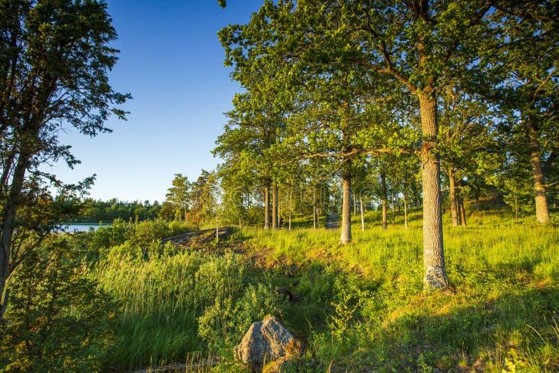Herrliche Naturlandschaft an einem Sommertag Grünpflanzen, Spiegelwasseroberfläche und blauer Himmel mit weißen Wolken des Schnee lizenzfreie stockbilder