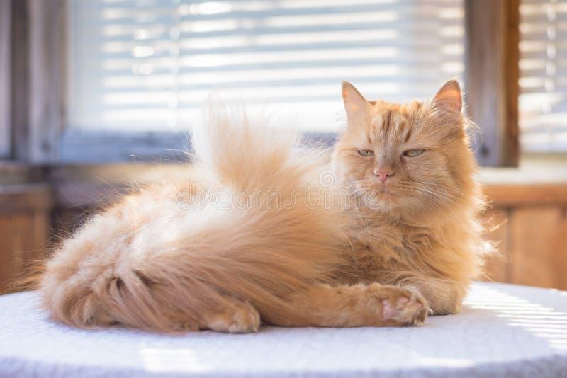 Herrliche rote Katze, die auf dem Tisch mit einer Leinentischdecke in der Sonne liegt lizenzfreie stockbilder