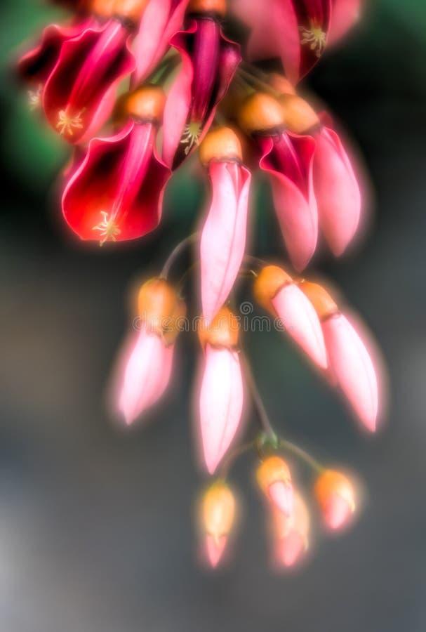 Herrliche und träumerische rote Blumen und orange Knospen Makro mit einem wunderbaren grünen bokeh stockfotos