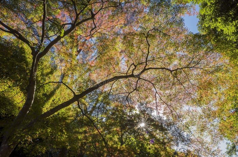 Herrlicher Ausblick, Fallfarbe an Daigoji-Tempel, Japan im Herbst stockfotografie