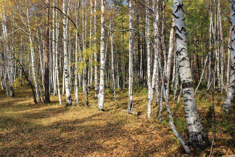 Herrlicher Herbstwald lizenzfreie stockfotos