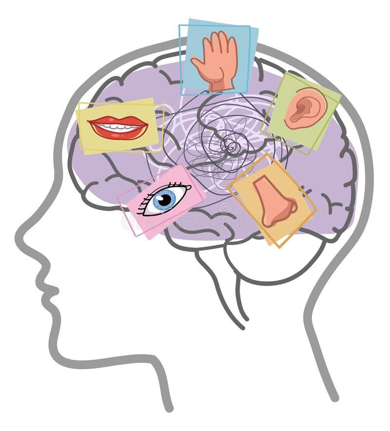 Hersenen 5 de wanorde van de betekenissenmening royalty-vrije illustratie