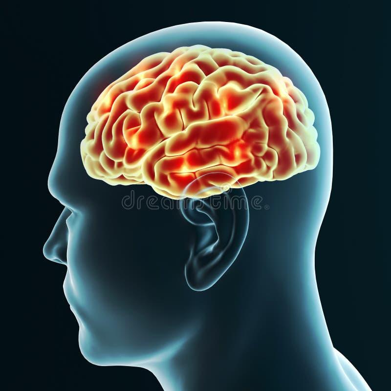 Hersenen degeneratieve ziekten, Parkinson, synapsen, neuronen, Alzheimer ` s stock illustratie