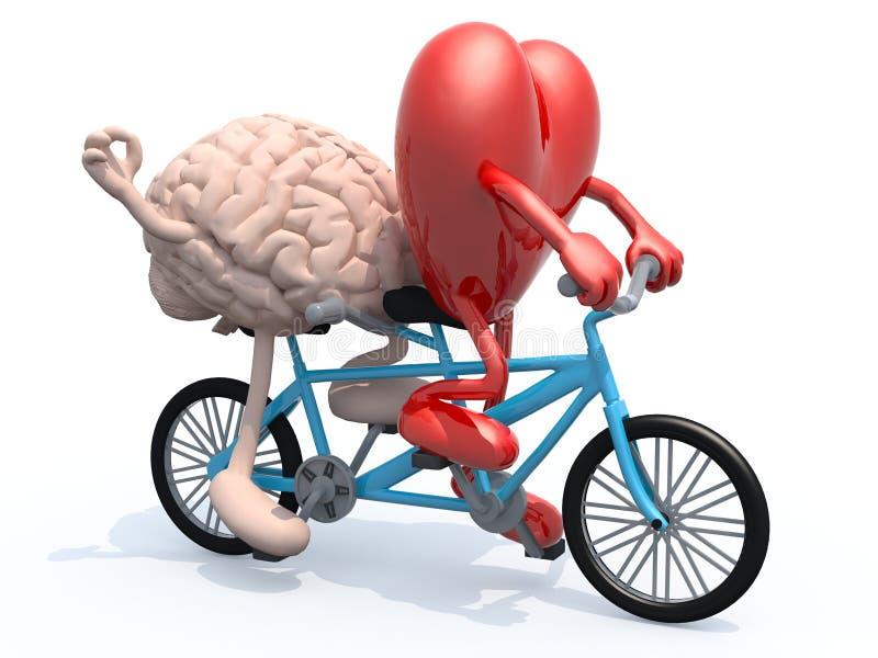 Hersenen en hart die fiets achter elkaar berijden royalty-vrije stock afbeeldingen