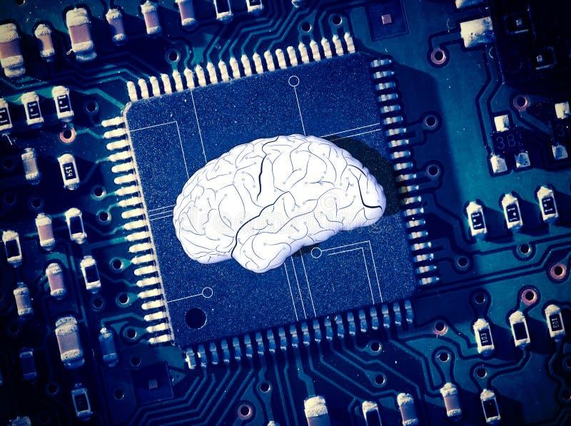 Hersenen in het midden van blauwe kringsraad royalty-vrije stock fotografie