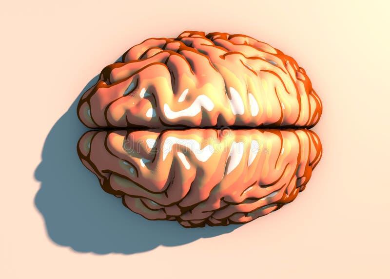Hersenen, neuronen, synapsen, neurale netwerkkring van neuronen, degeneratieve ziekten, Parkinson stock illustratie