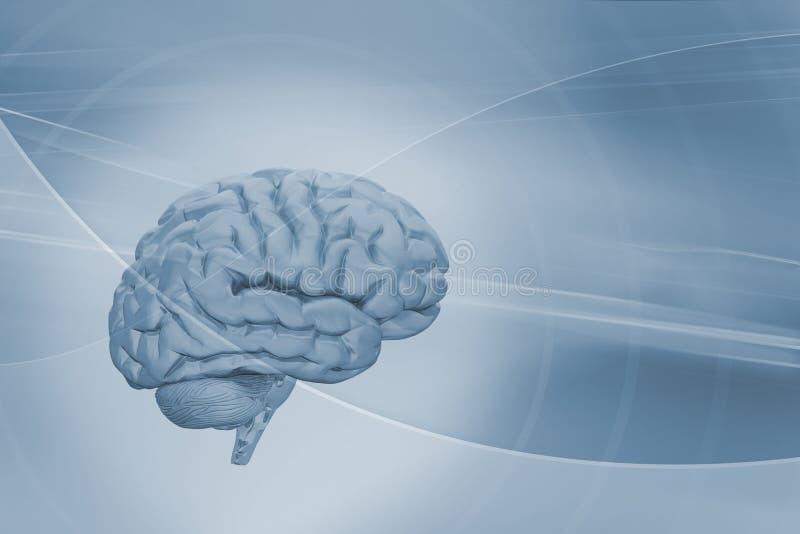 Hersenen op abstracte achtergrond royalty-vrije illustratie