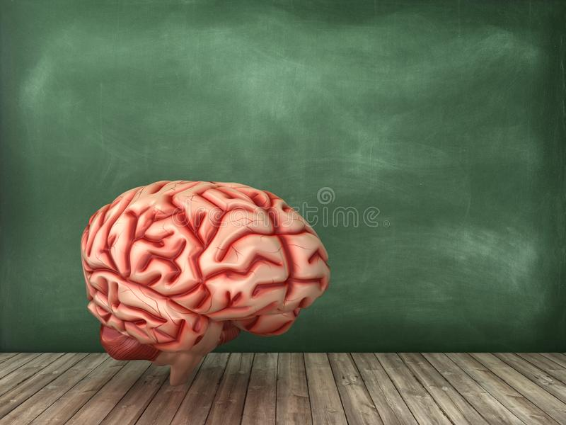 Hersenen op Bordachtergrond royalty-vrije illustratie