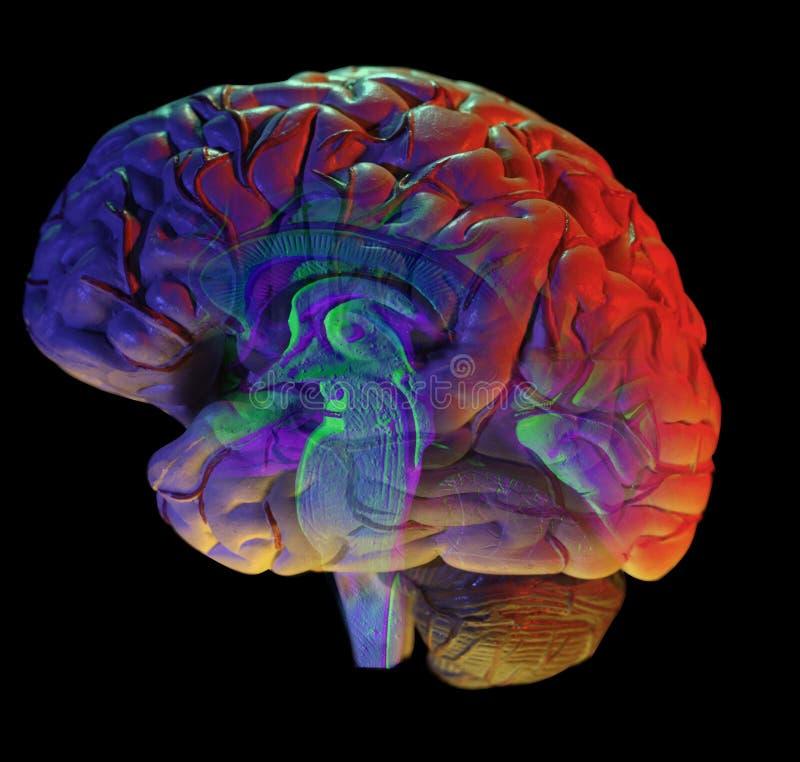 Hersenen op zwarte royalty-vrije illustratie