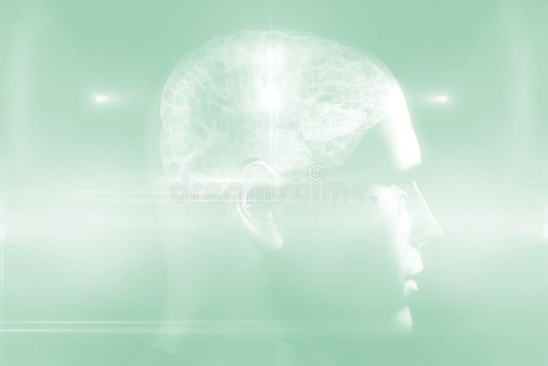 Hersenendiagram in menselijke hoofd 3d royalty-vrije illustratie