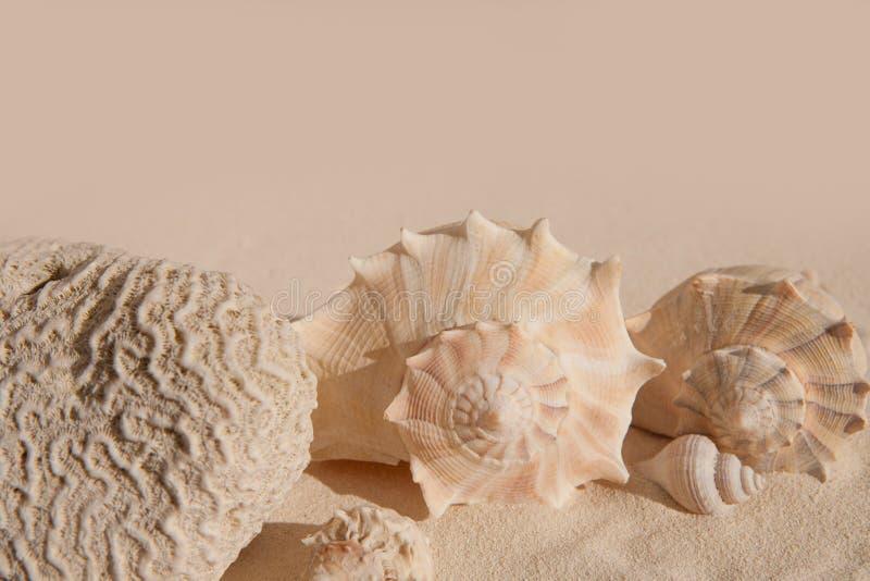 Hersenenkoraal en zeeschelpen op wit zand beac royalty-vrije stock afbeelding