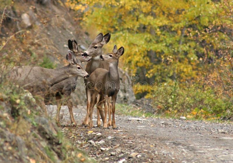 Herten in de herfst royalty-vrije stock fotografie