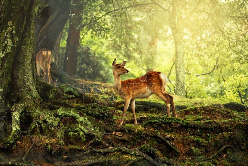 Herten in de wildernis stock afbeelding