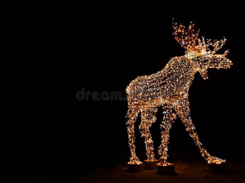 Herten die in dark, decoratie buiten gloeien royalty-vrije stock fotografie