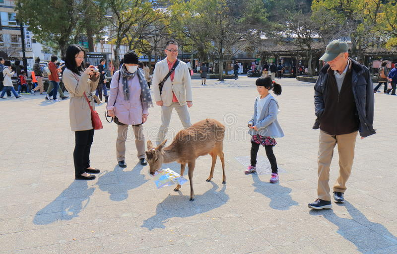 Herten in Miyajima iland Hiroshima Japan royalty-vrije stock afbeeldingen