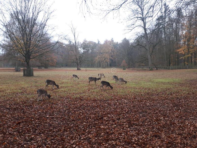 Herten op een open gebied royalty-vrije stock foto's
