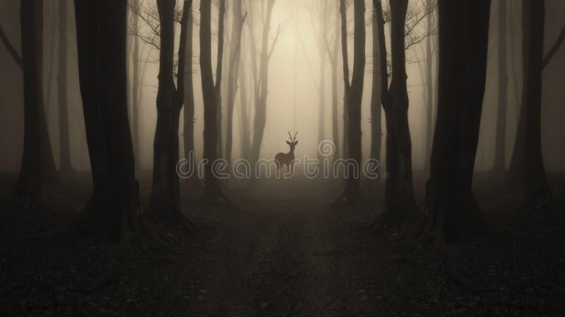 Herten op weg in geheimzinnig donker bos royalty-vrije stock afbeeldingen
