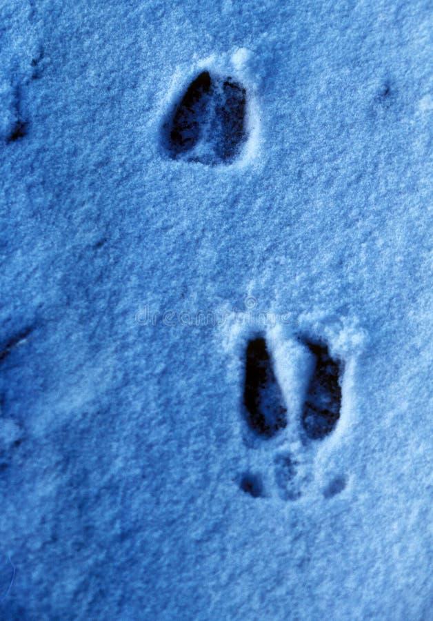 Hertensporen in de Wintersneeuw royalty-vrije stock afbeeldingen