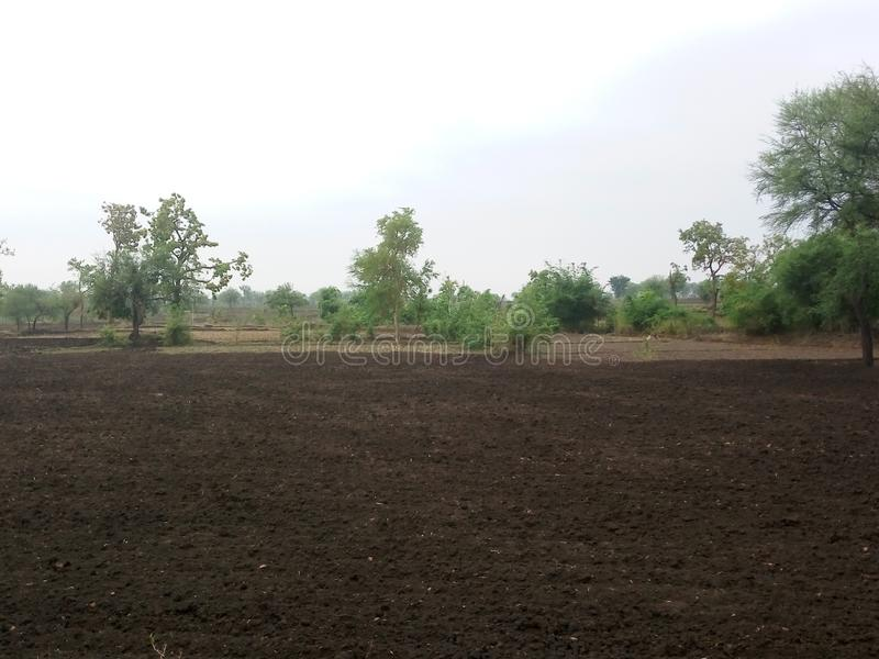 Hervesting filed prepared for agriculture. In monsoon time in India royalty free stock images