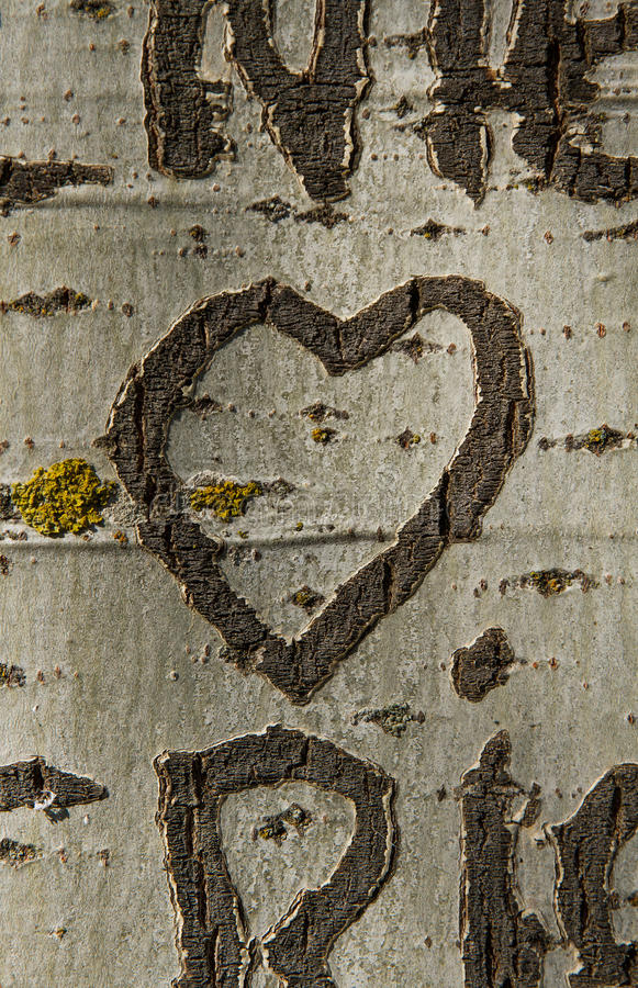 Herz, das einen Baum graviert stockfoto