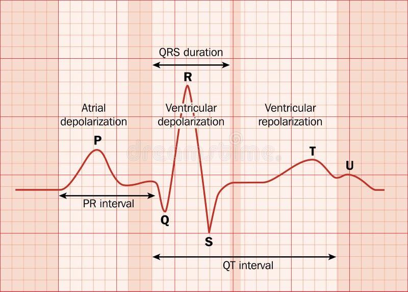 Herz ecg vektor abbildung