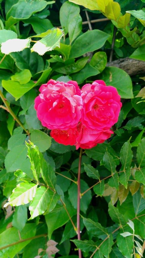 Herz-förmige Blume lizenzfreies stockbild