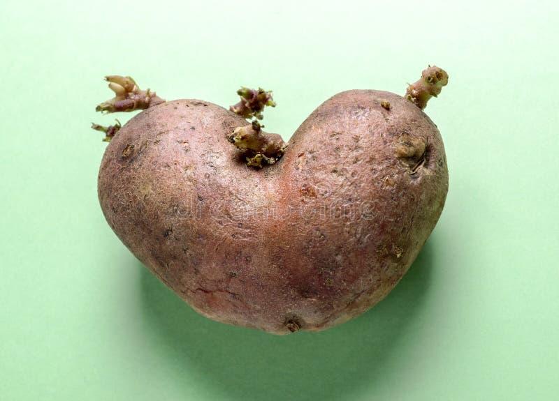 Herz-förmige Kartoffel der Nahaufnahme in der Mitte des grünen Hintergrundes lizenzfreies stockbild