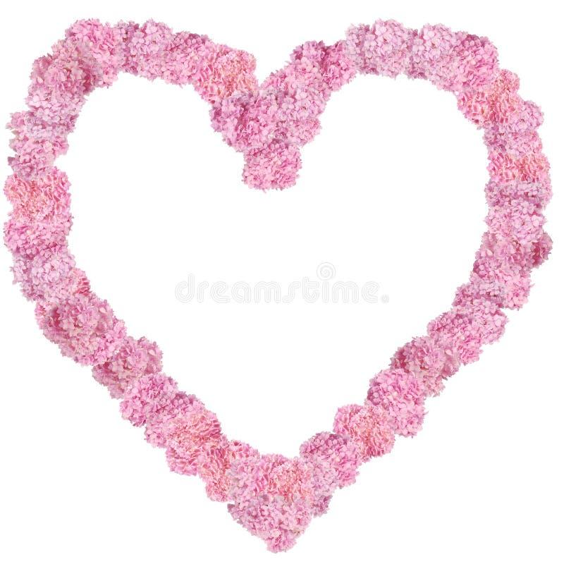 Herz-förmiger Blumenrahmen der schönen rosa Hortensien stockfoto