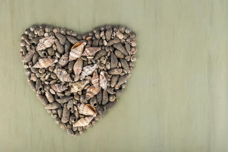 Herz formte graue verschiedene Muscheln lizenzfreie stockbilder