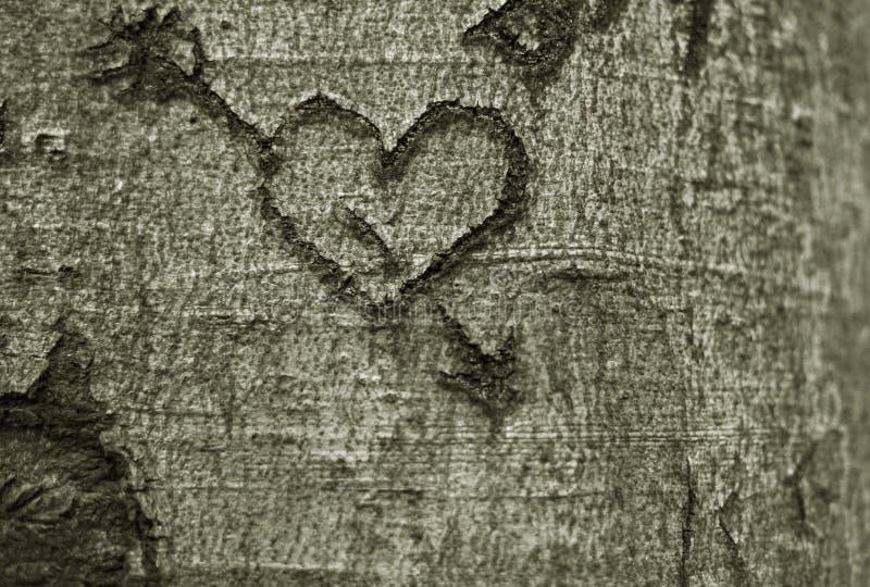 Herz geschnitzt in einem Baum stockbild