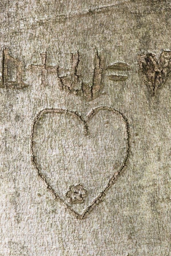 Herz geschnitzt im Baumstamm lizenzfreie stockfotografie