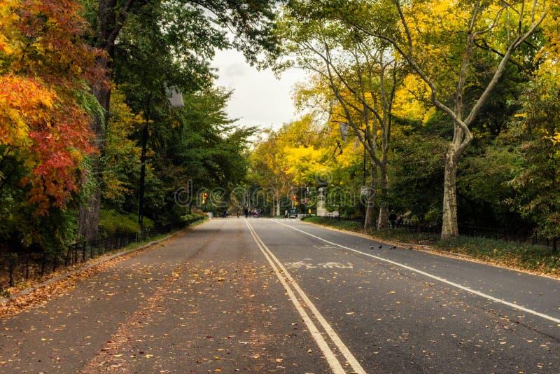 Herz im Himmel gestaltet durch bunte Baumaste im Fall in Central Park lizenzfreies stockbild