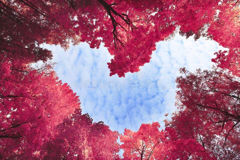 Herz umgeben durch Frühlingsbäume stockfotografie
