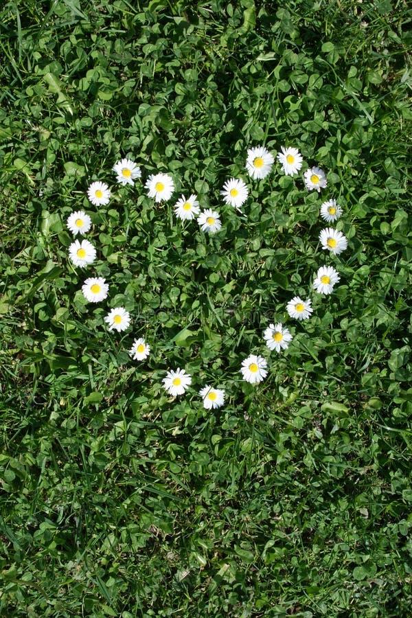 Herz von Gänseblümchen stockfoto