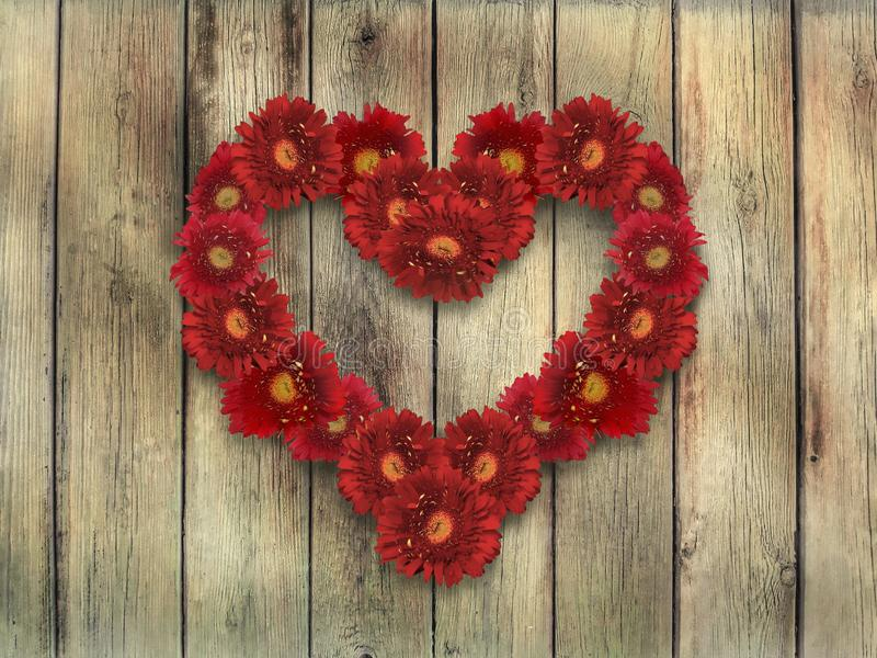 Herz von roten Gänseblümchen auf Hintergrund des hölzernen Brettes stockfoto