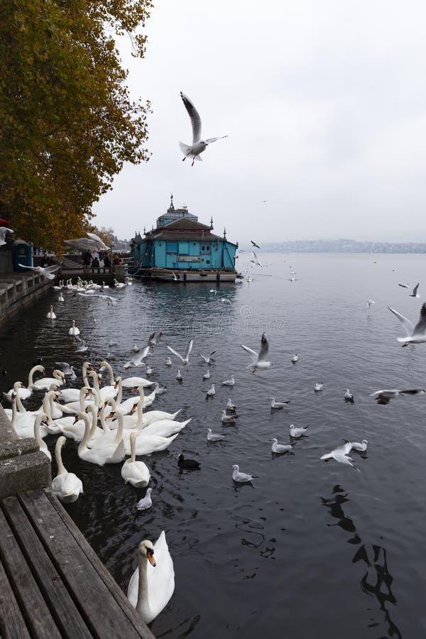 Herzbaracke kabaret-teater i Zurich Schweiz royaltyfria bilder